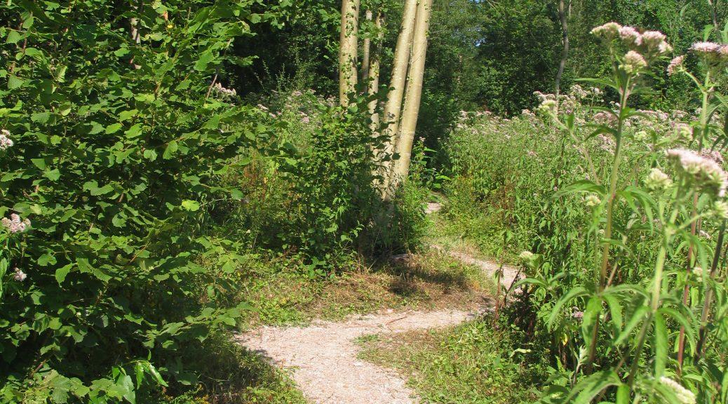 Le sentier - Alphonse Beauregard Sentier-1038x576